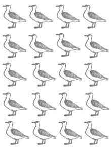 seagulls, greetings card, cards, birthday cards,